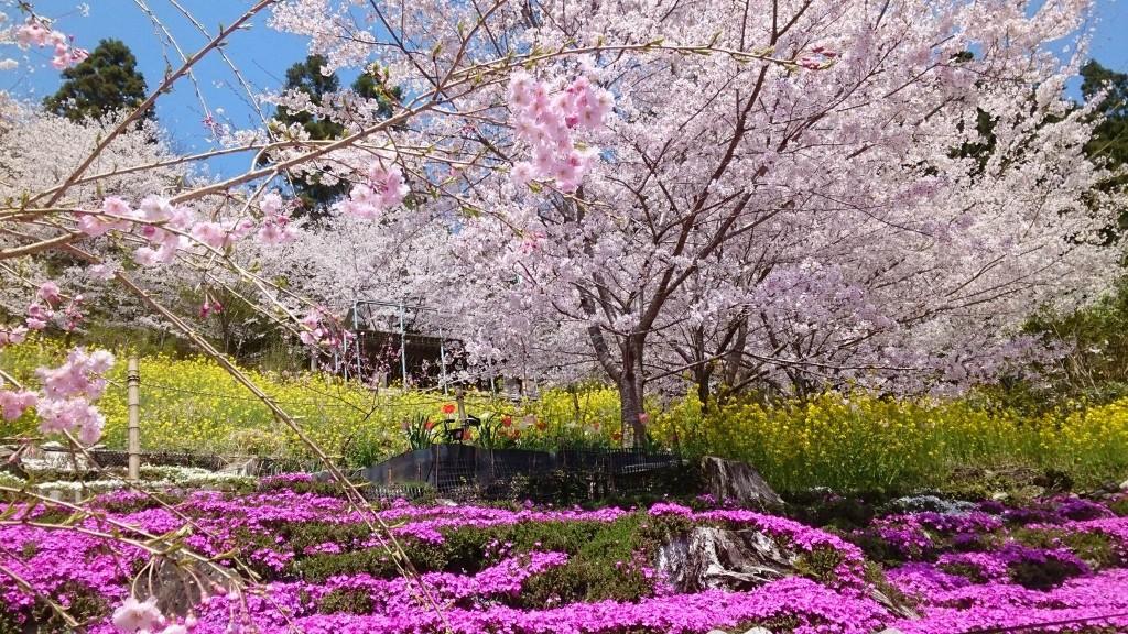 手作りの「さくら祭り」で、人口400人の大川村に2000人を集めた川上さん夫妻(離島を除いて日本で人口が最も少ない大川村を訪問)