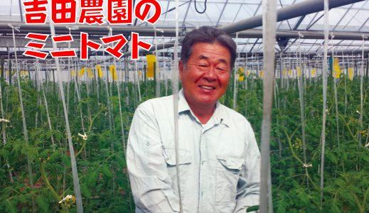 """""""肥後もっこす"""" 吉田富明さんのミニトマトにかけた青春"""