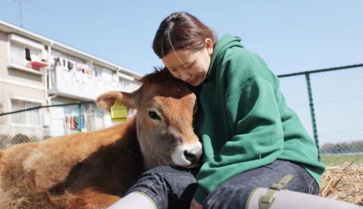 【そんな生き方あったんや!】第20回「牛の呼吸を感じながら撮る」牛写真家・高田千鶴さん